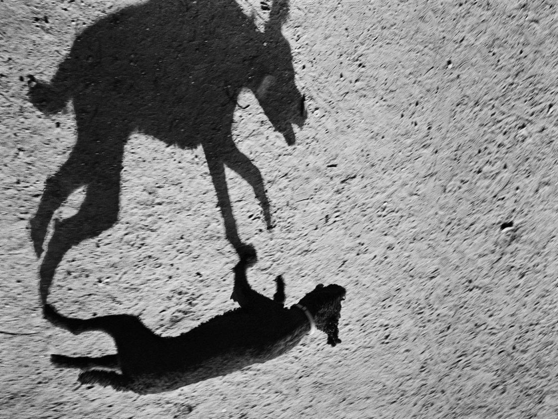ombre-chien-thomas-roma-07
