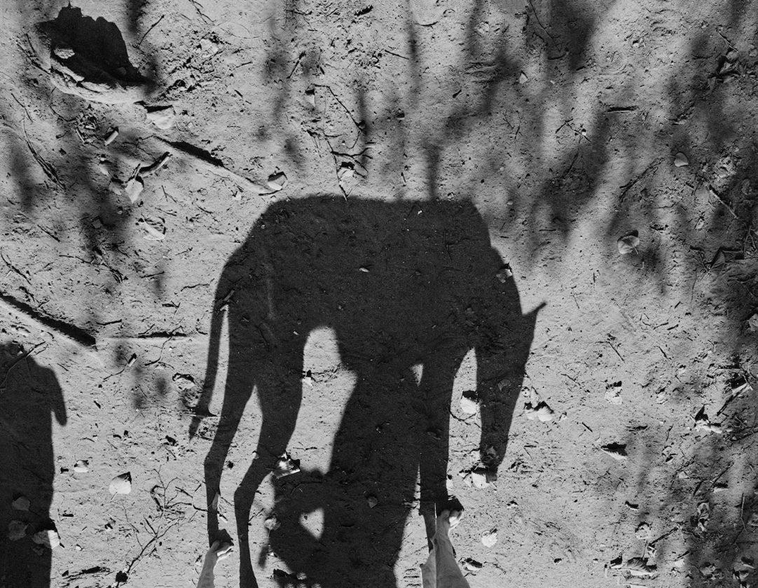 ombre-chien-thomas-roma-08