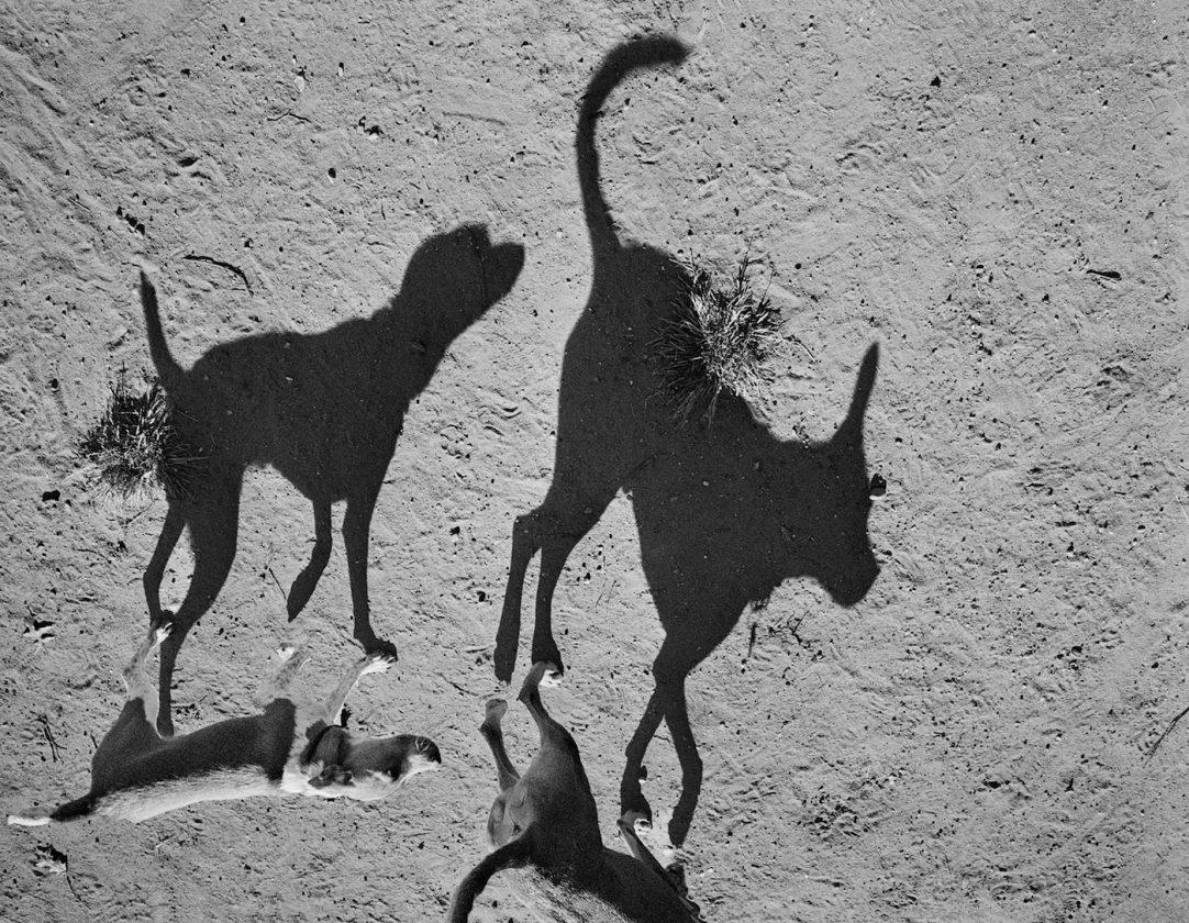 ombre-chien-thomas-roma-09