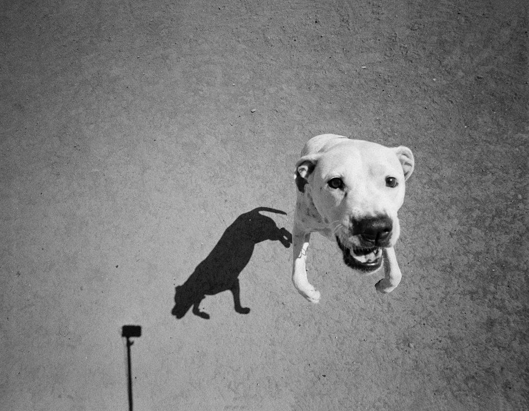 ombre-chien-thomas-roma-10