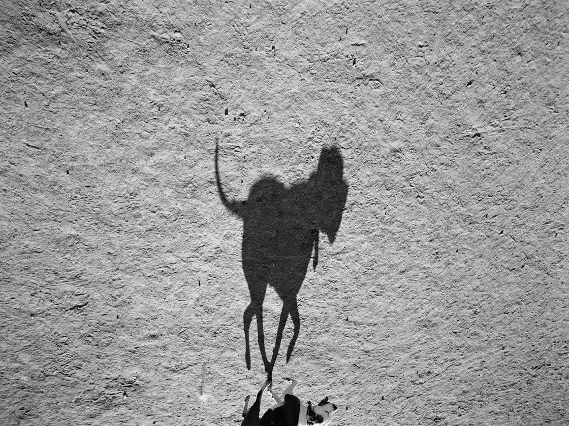 ombre-chien-thomas-roma-11