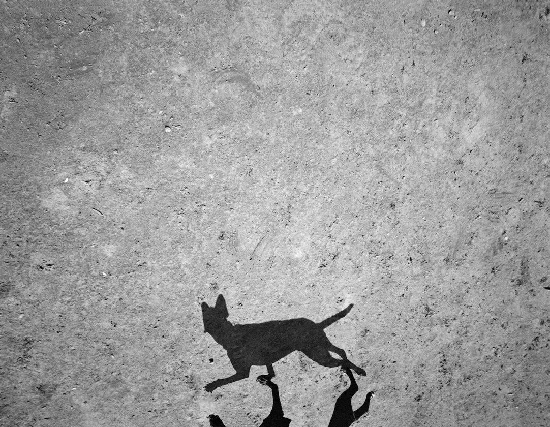 ombre-chien-thomas-roma-12