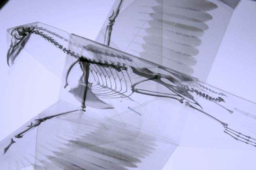 rayonx-origami-02