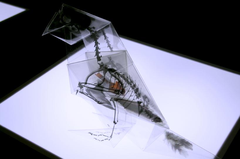 rayonx-origami-03