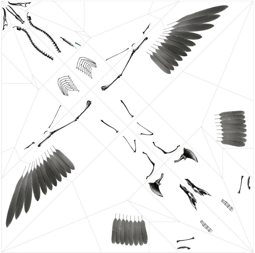 rayonx-origami-10