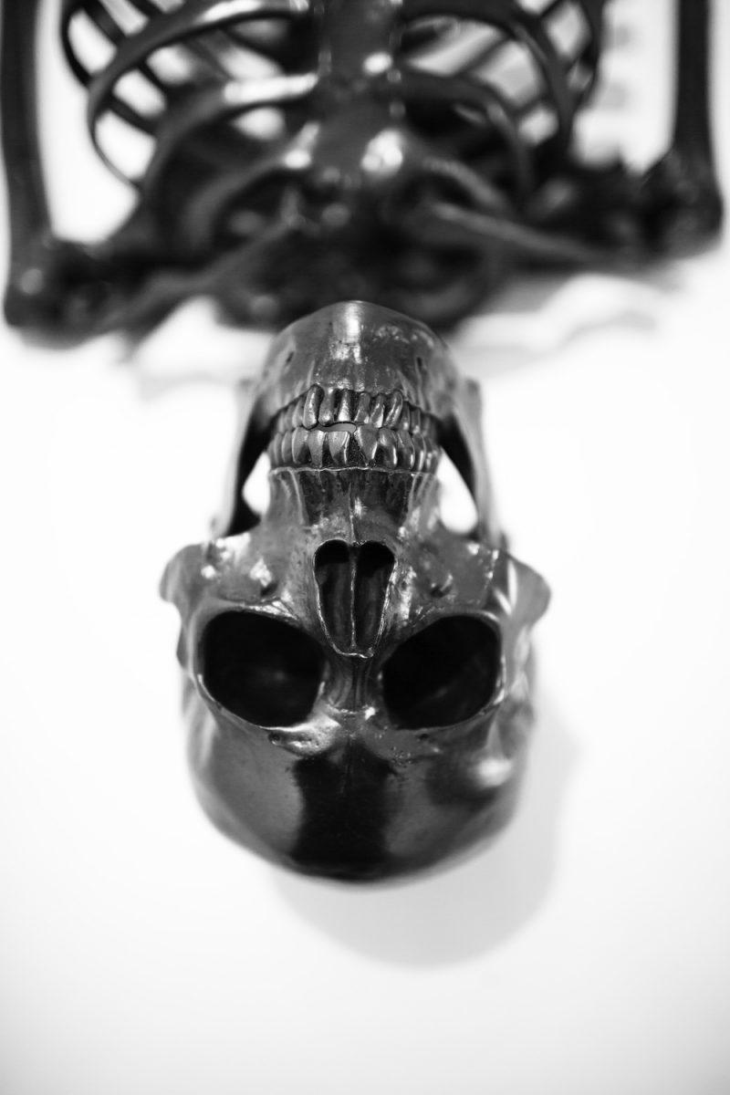squelette-graphite-agelio-batle-05