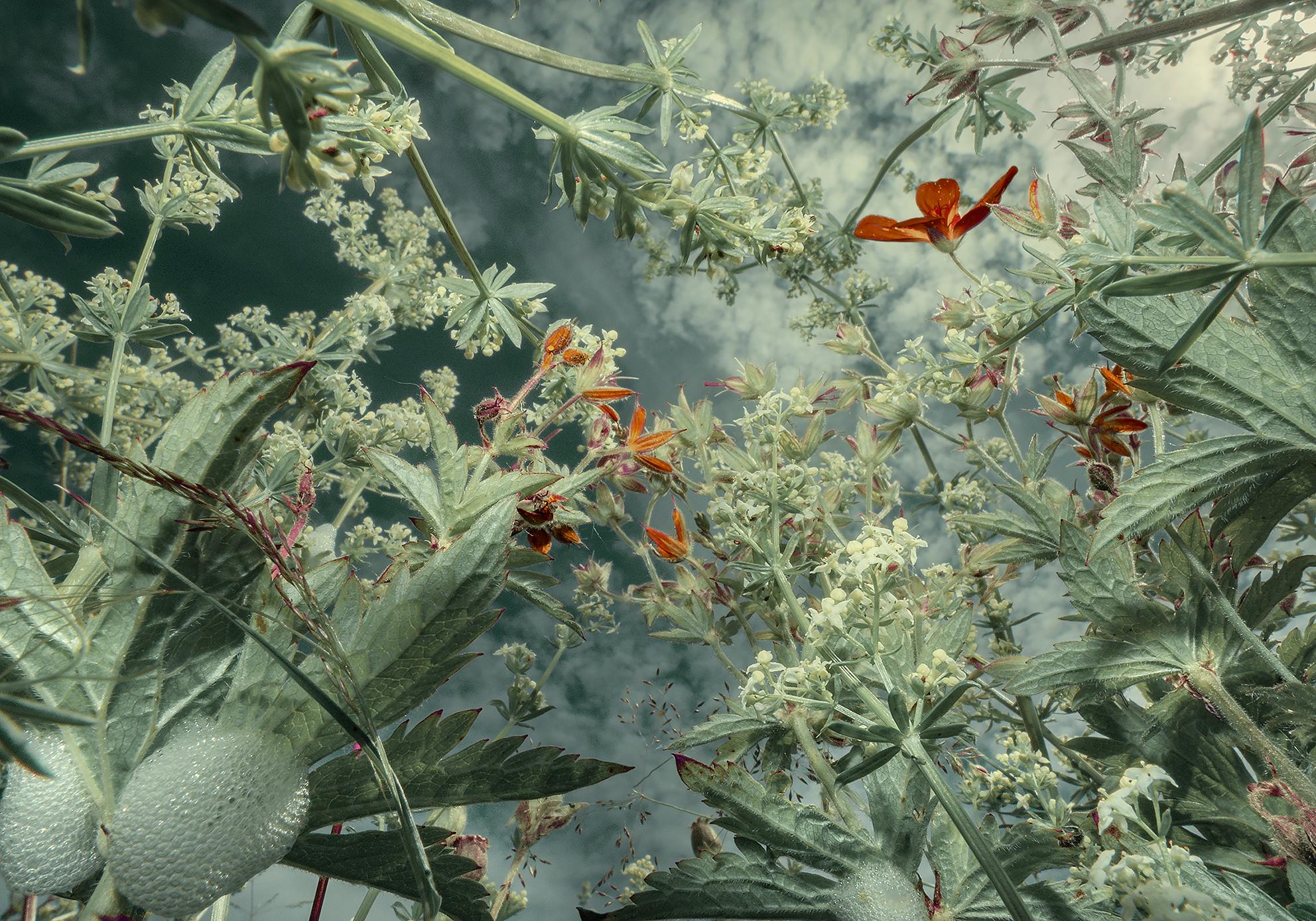 La Flore Au Ras Du Sol De Tine Poppe
