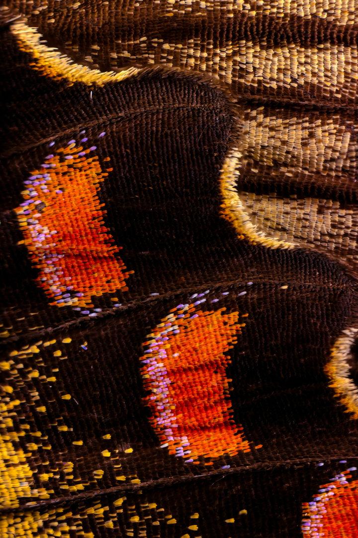 Les Ecailles Scintillantes Et Les Poils Extravagants Des Ailes De Papillons